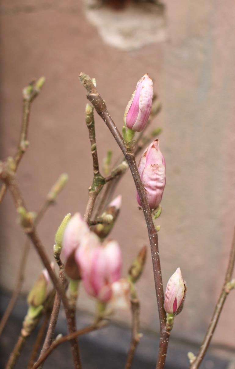 kevät2